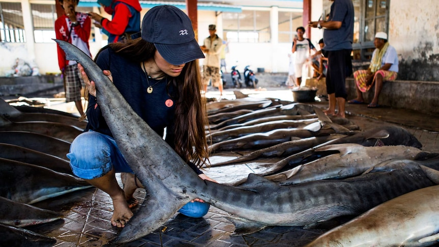 A young woman in a cap inspections a shark at a wet market, with fishermen looking on