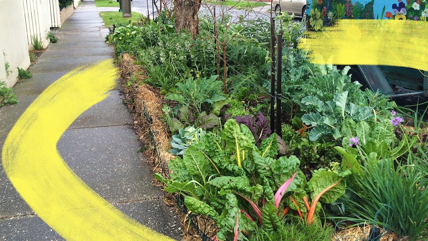 A healthy vegetable patch with leafy greens grows beside a footpath in Melbourne, to depict how to plant a nature strip garden.
