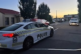 A police car drives down a tree-lined road at dawn