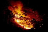 Bushfires in north-east Victoria have shorted out power infrastructure. (File photo)