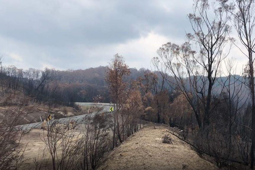Blackened trees fill the horizon