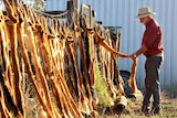 Don Sallway adds a wild dog scalp to others hanging from a fence.