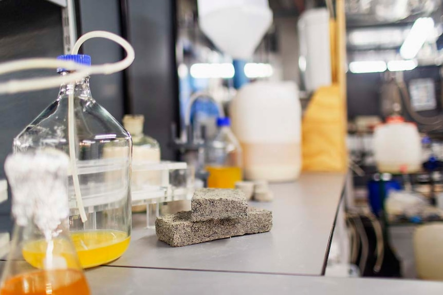 A bottle of urine placed next to a pile of bricks on a lab bench.