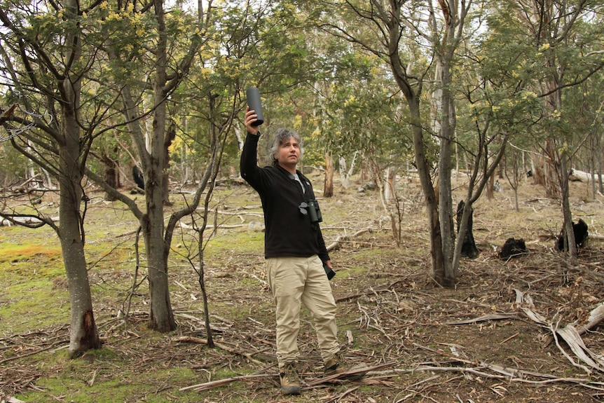 Australian National University PhD student Adam Cisterne trying to find masked owls by playing a recording of their calls