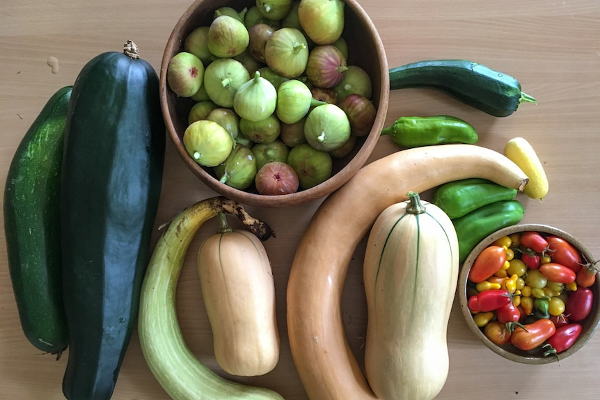 Zucchini, butternut pumpkin, cherry tomatoes, figs and chilli from a veggie patch that has been fertilised regularly.