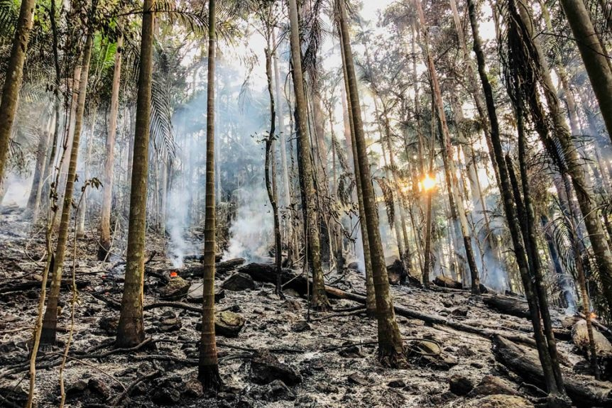 The Nightcap National Park was one of the Gondwana Rainforests severely impacted by fire last November.