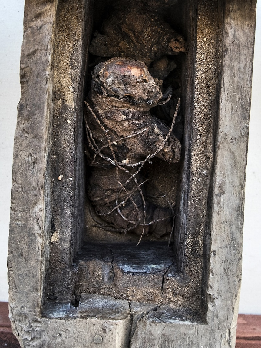 The mummy of a cat is displayed.