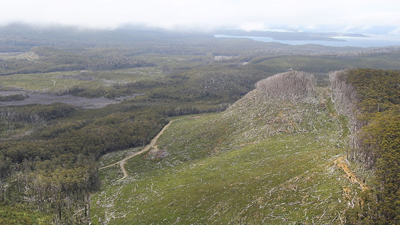 Senator Colbeck has published photographs he says show recent harvesting in some of the extended world heritage listed areas
