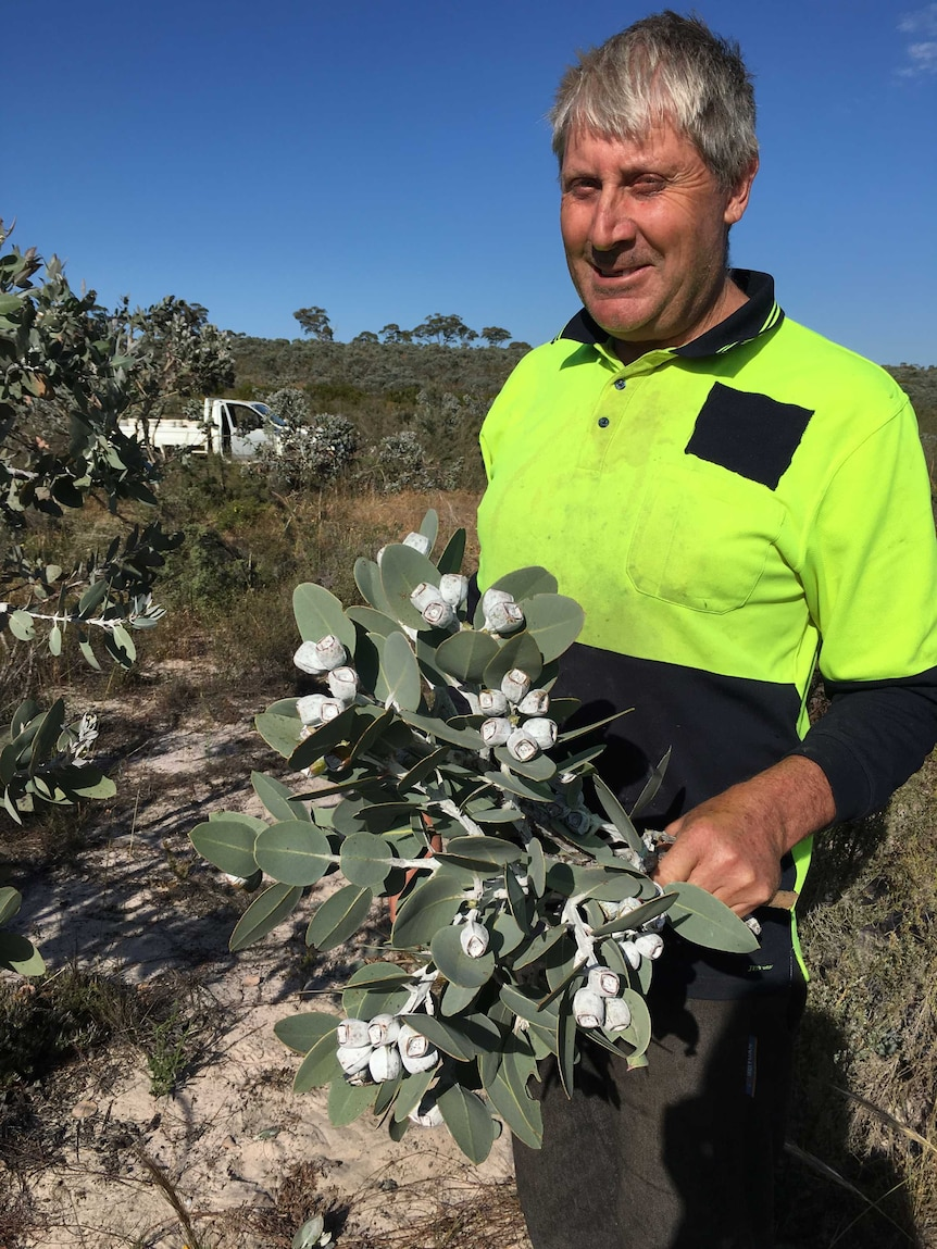 If the success of Victorian farmer Brett McDonald is anything to go by, the native Australian flower market is blooming.