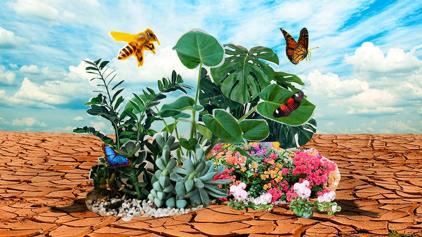 A collage of photographs shows a small green oasis full of insects and butterflies in the middle of a dry, parched landscape