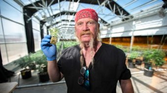 A man holds a small weed plant