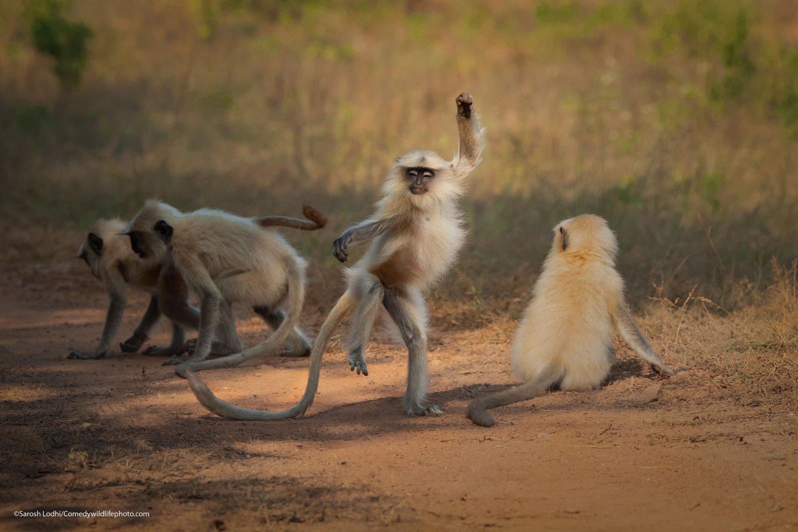 A monkey strikes a pose.