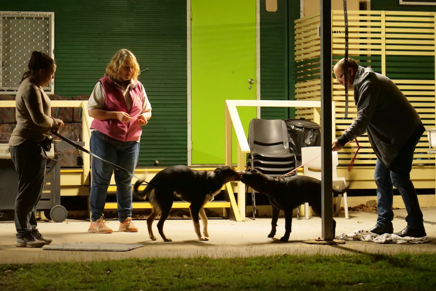 Three people stand up, two hold interacting dogs, sheds, chairs and other objects behind.