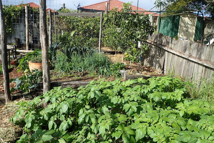 Vegetable patch in a garden.