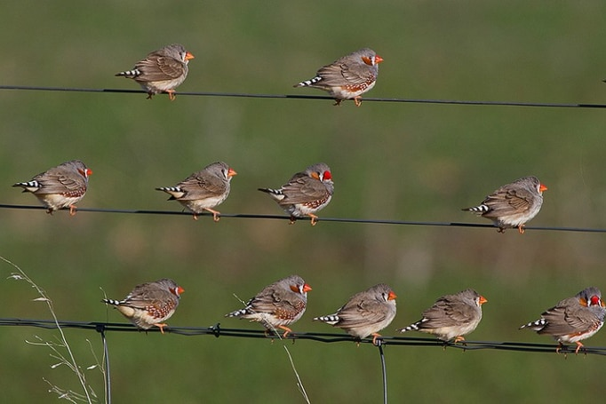 It's the first study to show how vocalisation can help birds to survive heat waves.
