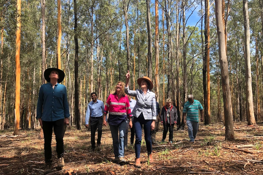 Stakeholders walking through the Cowarra State Forest
