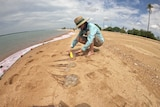 A woman in a hat, shirt and shorts kneels on a beach and measures jellyfish.