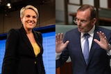 A side-by-side image of Labor's Tanya Plibersek and Tony Abbott