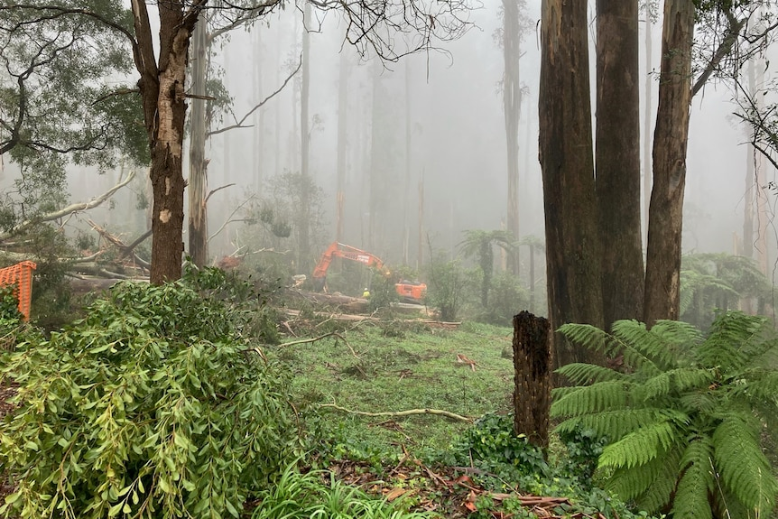 A digger works in a misty forest to clear downed trees.