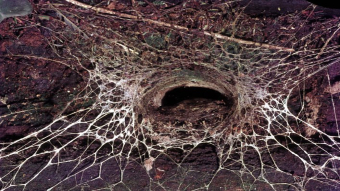 The opening to a funnel-web spider's web.