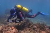 Scuba diver photographs coral