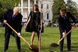 Composite of Donald Trump and Emmanuel Macron planting tree at White House, and missing tree