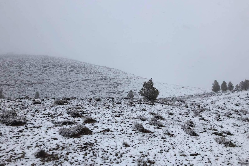 Snow covers hillsides at Willow Springs Station in the Flinders Ranges.