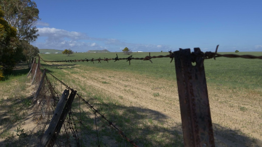 Looking through a fence, topped by barbed wire, over agricultural land.