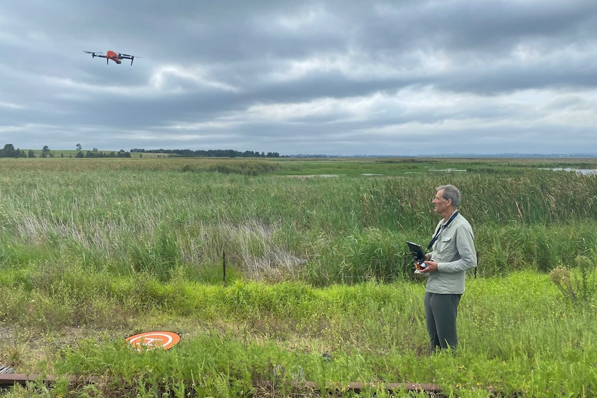 A man stands near a large wetland area holding a controller, while a bright orange drone hovers a short distance away.