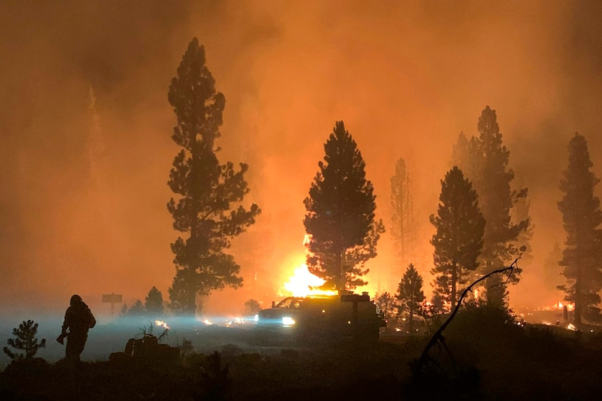 A fire burning through forest at night