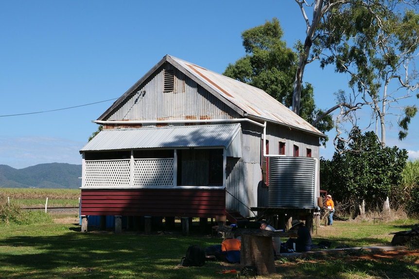 an old building made from timber and corrugated iron stands on a grassy area, with cane fields in the background