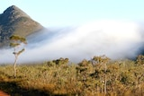 Foggy Mt Toolbrunup