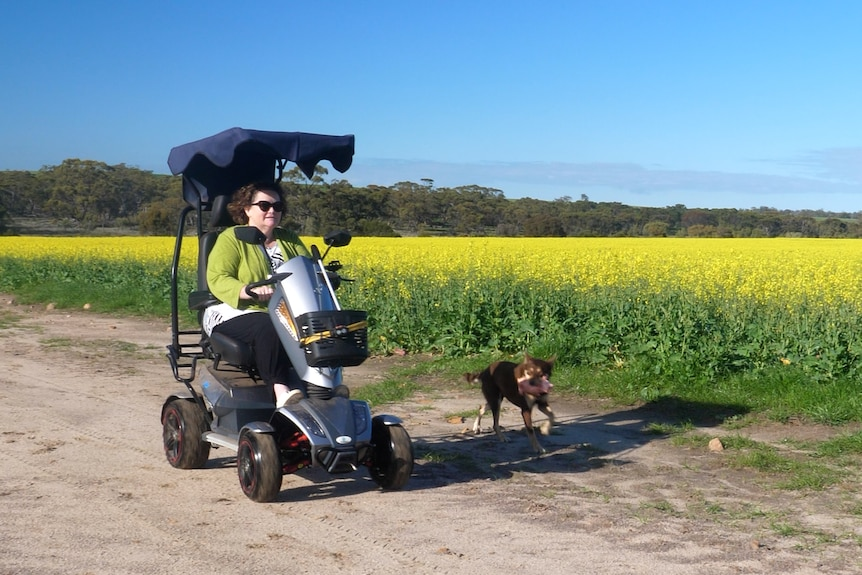 A woman driving a scooter past canola fields with her dog.