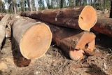 Logs on the ground in a burnt forest