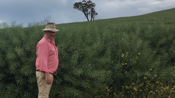 Man standing in front of Canola crop
