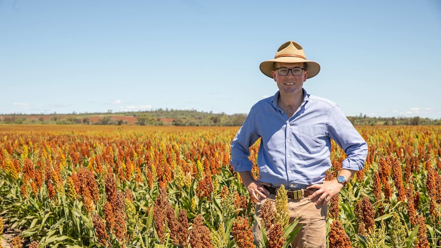 A man in a hat standing with his hands on his hips in a paddock of sorghum.