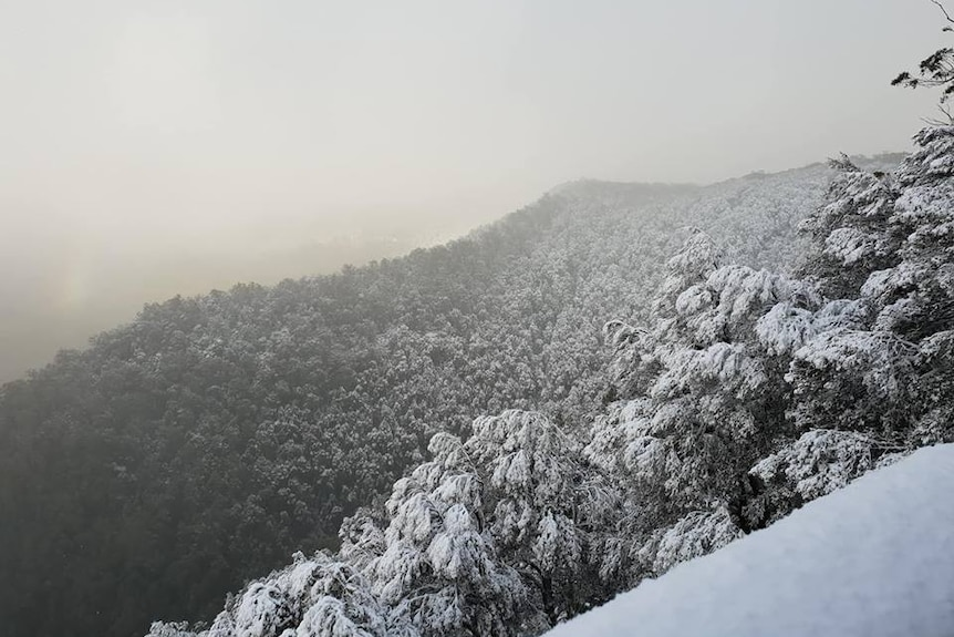 A view over the top of the mountain and treetops dusted in snow.