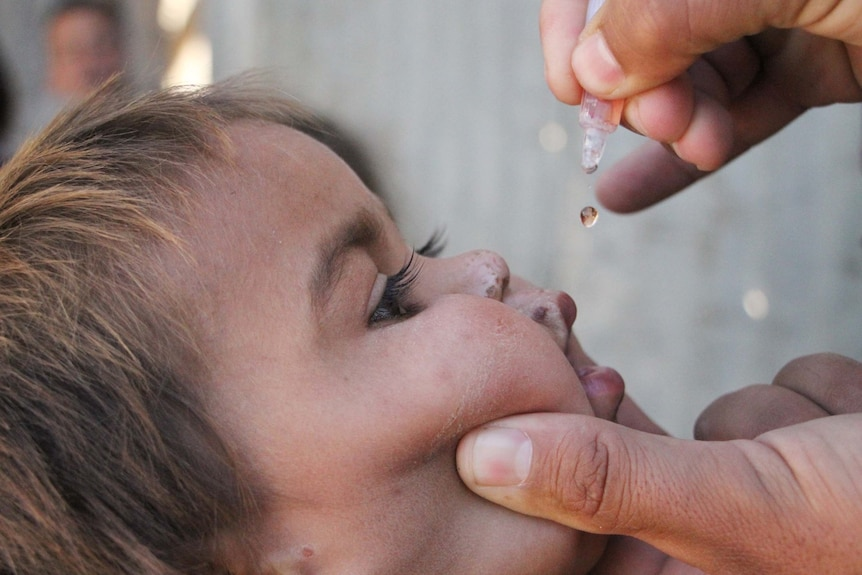 A drop from an oral polio vaccine about to go into a child's mouth.