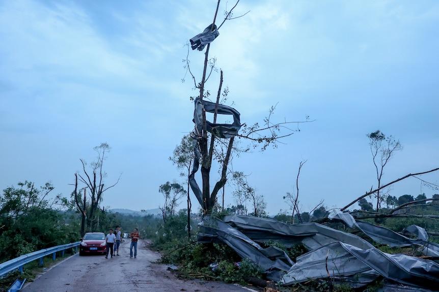 Metal înfășurat în jurul unui copac după un uragan