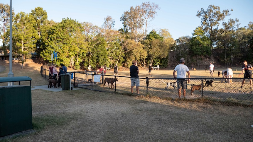Residents and their dogs inside a busy dog park in Morningside, Brisbane.