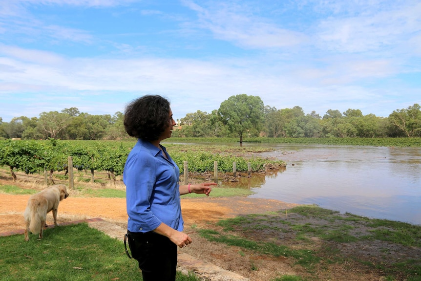Woman and dog look out over submerged grape vines