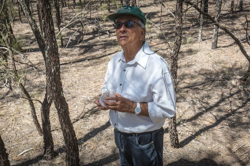 Don Sands stands in the bulloak woodland