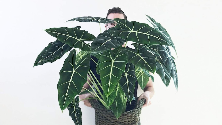 A man holds a tall indoor plant, in a story about DIY potting mixes you can make to help indoor plants thrive.