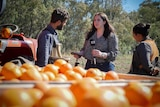 A young woman holding a microphone bearing the ABC logo interviews two people next to a large tub of oranges at an orchard.