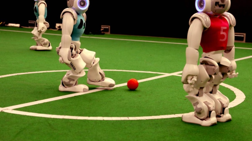 RoboCup World Championships: UNSW's robots during a recent training session