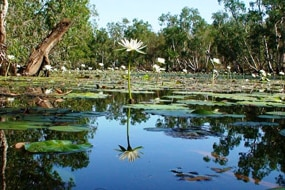 The Watson River lagoon on Queensland's Cape York (Supplied: Tim O'Reilly)