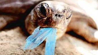 Turtle with plastic in mouth.