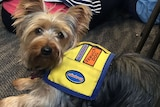 Molly diabetes assistance dog