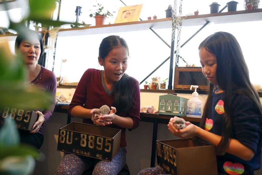 Two young girls hold hedgehogs.