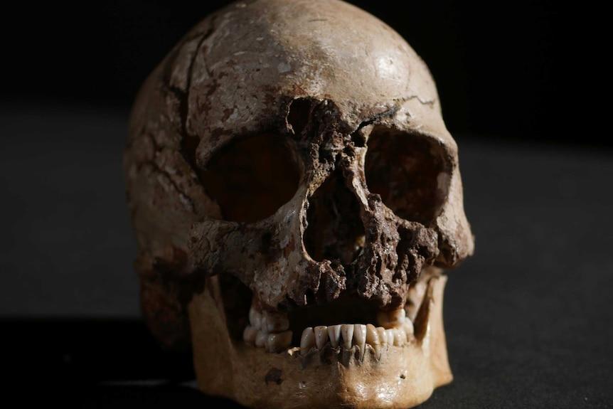 Cheddar Man's skeleton up close